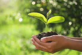 Empresas de consultoria ambiental sp